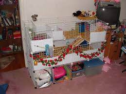 cages for guinea pig