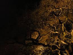 tree night