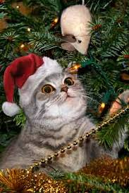 cats christmas trees