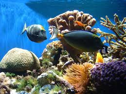 coral reef fish photos