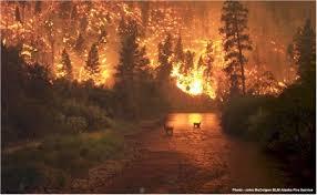 ormanlar yok oluyor