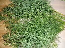 dry dill