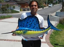 fish sizes