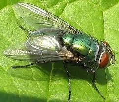 fly animal