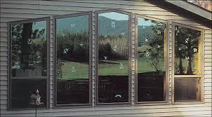 birds hitting window