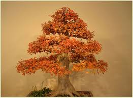 orange bonsai
