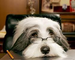 shaggy dog movies