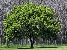 free images of trees