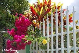 flowers in puerto rico