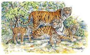 big cats tiger