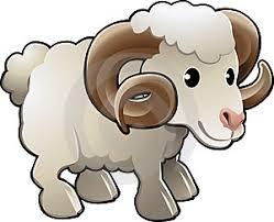 farm animal sheep