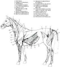 horse massages