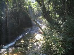 rio tijuca