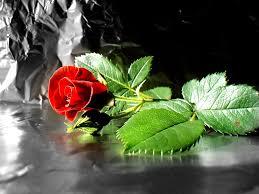 rose desktop