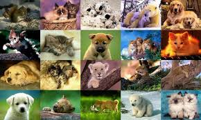 animal screensaver