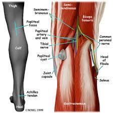 back knee