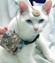animal testing cosmetics