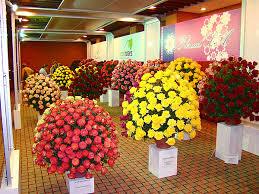 flowers that look like roses