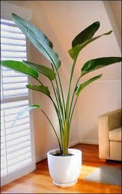 indoor crops