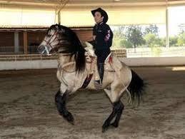caballo de vicente fernandez