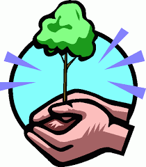 conservation of trees