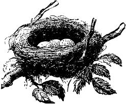 nests eggs