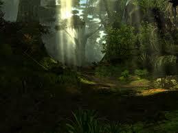 تابش نور در جنگل