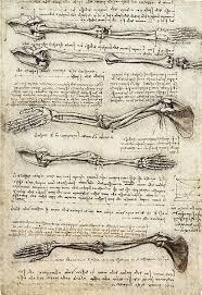 leonardo da vinci anatomy drawings
