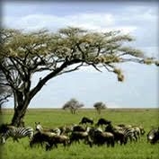 africa ecosystem