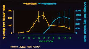 estrogen levels menstrual cycle
