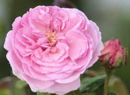 blush color