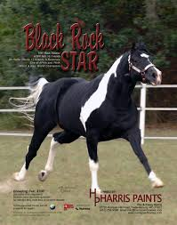 black rockstar