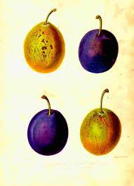 old botanical prints