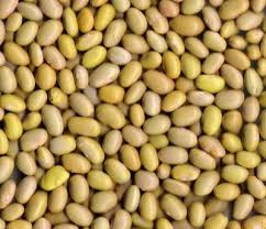 canary beans