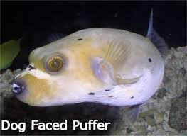 fish that live in rivers
