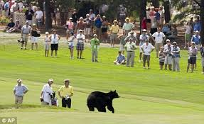 bear golf course