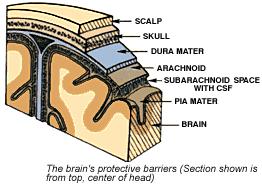 brain layer