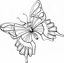 butterflies pictures to color