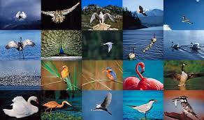 birds species