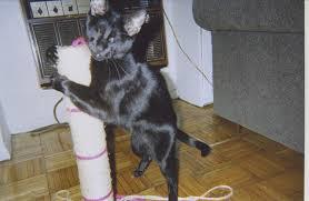 homer cat