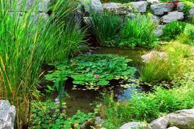 pond landscapers