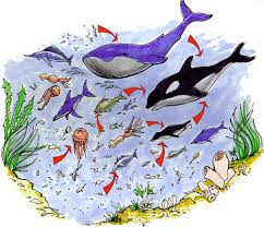 ocean animals food chain