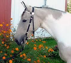 saddle for horses