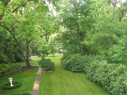 back yard green