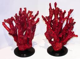red coral branches