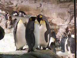 penguins sea world