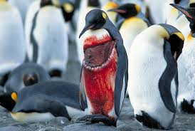 penguin and killer whales