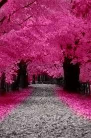 pink leaf plant