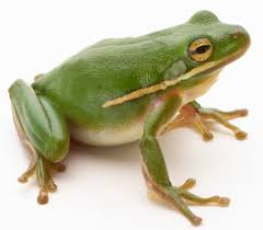 pictures on frogs
