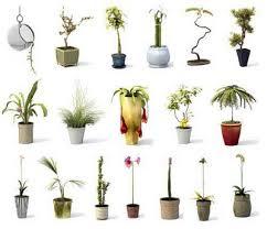 3d flower models